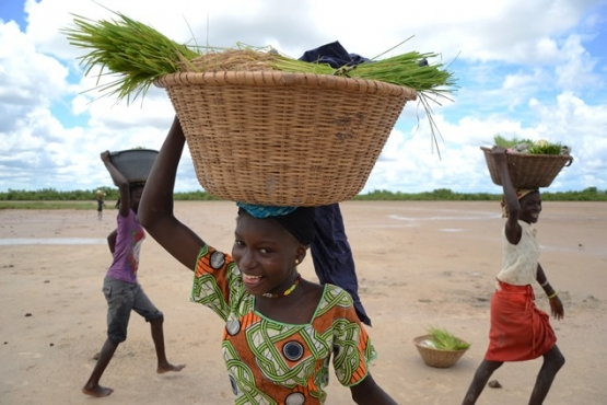 Experiencia responsable en Gambia