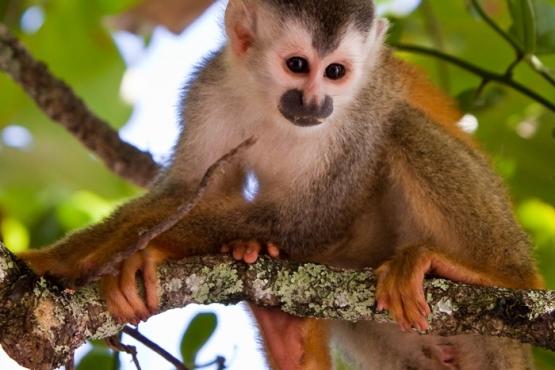 Mono en Manuel Antonio - viaje organizado a Costa Rica