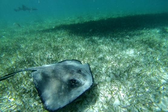 Manta Raya - viaje a medida a Galápagos
