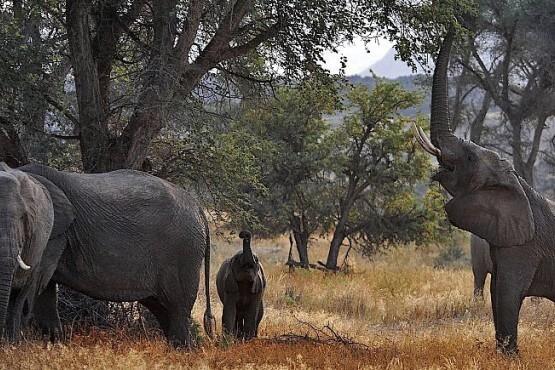 Viaje fotográfico a Namibia