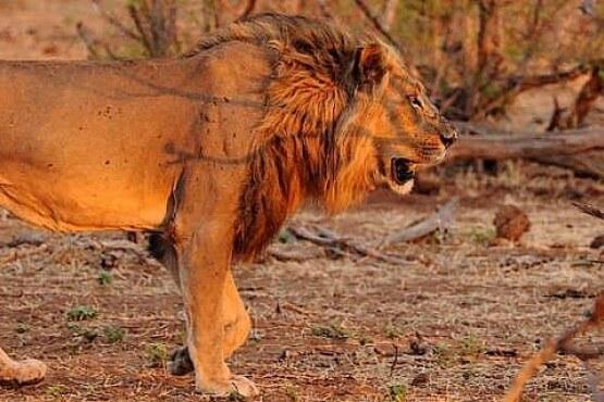Viaje fotográfico a Botswana y Zimbabue