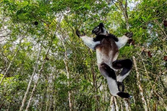 Andasibé - viaje fotográfico a Madagascar