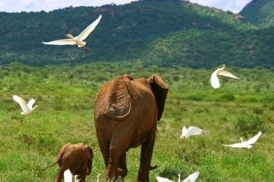 Serengeti - viaje organizado a Tanzania