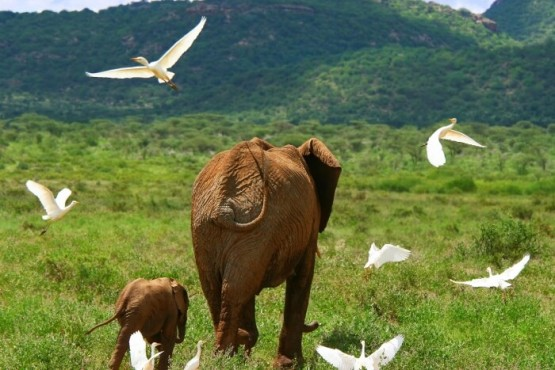 Elefante en Serengeti - safari fin de año en Tanzania