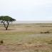 Paisaje del parque nacional de Etosha