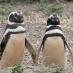 Pingüinos en Punta Tombo - Viaje a medida a Argentina