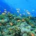 Los bellos fondos marinos de Hurgada - viaje alternativo a Egipto
