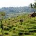 Un paseo por los arrozales de Bali - viaje en grupo a indonesia