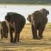 Parque nacional de Minneriya - viaje a sri lanka novios