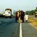 Las carreteras de Rajastán - viaje a medida a la India