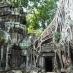 Ta Phrom cubierto por la jungla - viaje organizado a Vietnam y Camboya