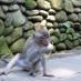 Un nuevo amigo en el templo de los monos de Ubud