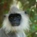 Un mono con boqué