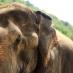 Los reyes de la selva en Chiang Mai - Viaje de aventura a Tailandia