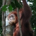 Viaje a medida Sumatra