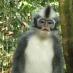 Mono en Bukit Lawang - Sumatra