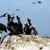 Islas Ballestas - viaje a medida a Perú