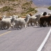 Valle del Colca - viaje a medida a Perú