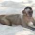 Mono en los Lençois Maranhenses - Viaje de aventura en Brasil