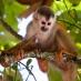 Mono en Manuel Antonio - viaje sostenible a Costa Rica