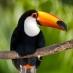 Un simpático Tucán - viaje responsable a Costa Rica