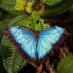 Mariposa en el parque nacional de Monteverde, Costa Rica - viaje a medida a Costa Rica