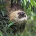 Un simpático Perezoso - viaje a medida a Costa Rica