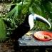 Tucán en el Amazoonico - tour por Ecuador
