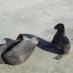 Leones Marinos - viaje a medida a Galápagos