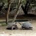 Centro de reproducción en Isabela - viaje a medida a Galápagos