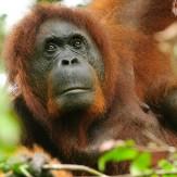 Indonesia: Borneo y Sulawesi
