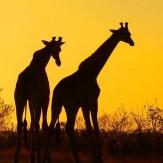 Aventura en el sur de África
