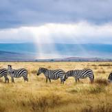 Tanzania fin de año