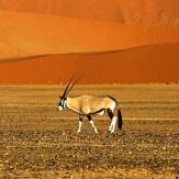 Descubriendo Namibia
