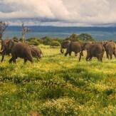 Aventura en Tanzania y Zanzíbar